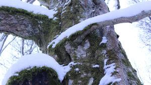 Många sällsyntar arter hittas i Białowieżskogen.