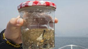 Ett vattenprov som innehåller en massa avfall.