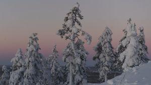 Arkivbild. Sodankylä den 30 december 2018.