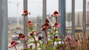 Blommor på balkong med Busholmen i bakgrunden