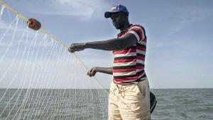 David Ekuwam Lokal säger att han förr brukade få upp ca 30 stora fiskar i sitt nät. När vi åker ut en andra gång har 12 fiskar fastnat i nätet.