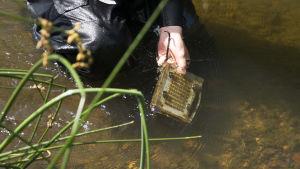 en man tar upp ett forskningsobjekt från vattnet.