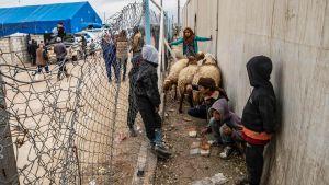 Barn i det kurdiskstyrda lägret al-Hol i Syrien. 16.11.2020