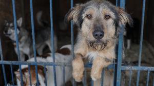 Hundar i en bur