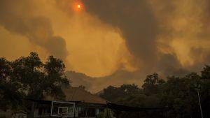 """Brandröken från """"Woolsey"""" fotograferad nära staden Malibu på lördagen."""