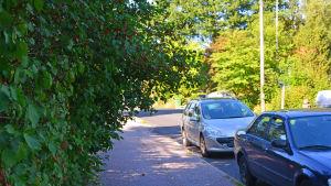 En trottoar och en buske.