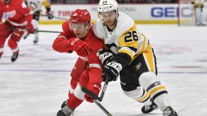 Detroits Vili Saarijärvi kämpar om pucken med Pittsburghs Andrew Agozzino.