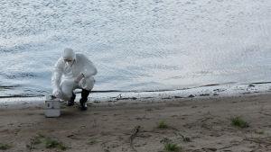 En person med vita skyddskläder sitter på huk vid vattenbrynet och tar provet från vattnet.