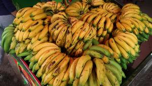 Massor bananer i en fruktbutik i Colombia.