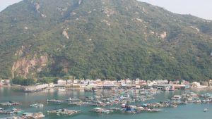 Fisk odlas i stor skala på en bukt i Hongkong. Byn består i stort sett enbart av fiskrestauranger som också driver fiskodlingarna.
