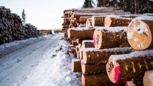 Stockar på rad efter skogsavverkning.