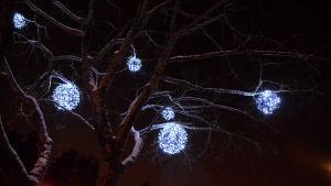 Ljusbollar i ett träd.