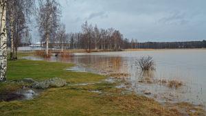 Stranden vid gräsmattan vid Skeppsbron i Lovisa. Gräsmattan är grön och vattnet är högre än vanligt.