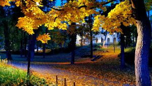 Syksyinen Näsinpuisto
