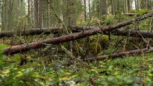 Metsää Pohjois-Karjalassa