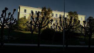 Park, träd som kastar skuggor över en byggnad