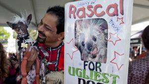 Kiinanharjakoira Rascalin omistaja kampanjoi kilpailupaikalla.