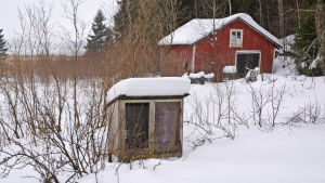 En bur för fåglar med träväggar står på en snötäckt gård. I bakgrunden synns ett rött uthus.