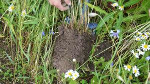 En spade med jord på som visar upp jordens kvalitet.