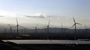 Vindkraftverk i Kalifornien.