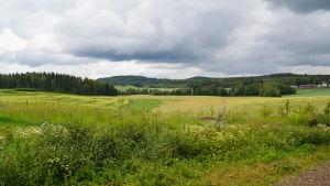 En bild på en åker. I bakgrunden ses skog och man ser att åkern ligger lite i en dal.