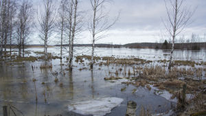 Högt vatten vid riksväg 8 i Vassor.