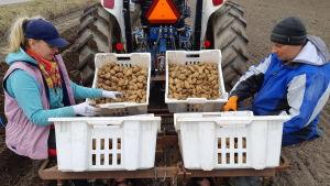 Nataliia Klymyk och Vitalii Vakar från Ukraina sitter bakpå en traktor och sätter potatis på en åker.