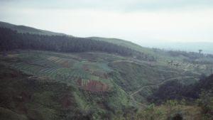 Tobaksfält på landsbygden i Kina.