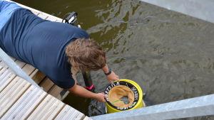 Filterpåsen sätts på plats i havssoptunnan.