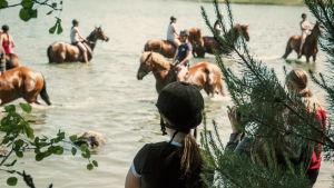 Hästar och ryttare i vatten.