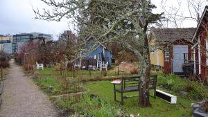 Stugor vid Brunakärr koloniträdgård.