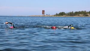 Tre män simmar i havet.