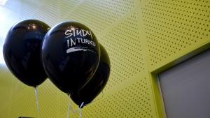 Ballonger där det står Study in Turku.