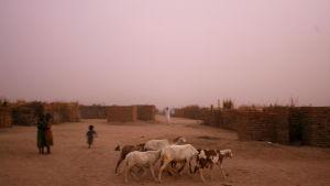 Flyktingar från Darfur vallar jätter i ett flyktigläger i grannlandet Tchad