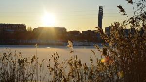 Soluppgång över ett istäckt Metviken i Vasa.