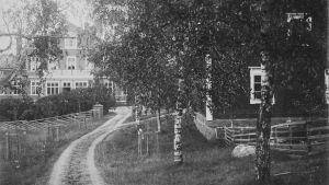 svartvitt fotografi av Stensböle herrgård. Stora björkar skymmer sikten.