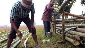 Bambun käsittely ennen suolakylpya