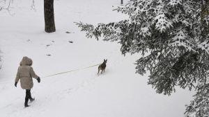 Snö i Esbo