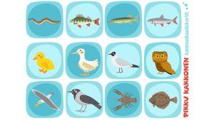 Pikku Kakkosen kommunikaatikortit linnut ja kalat