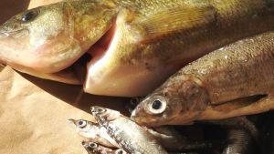Luonto-Suomen kalailta