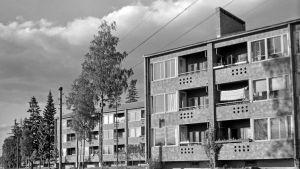 Bild på gamla höghus. Bild tagen år 1956.