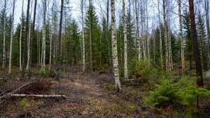 En stig leder genom skogen.