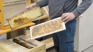 Tomas Bruce visar upp en av sina demonstrations bikupor