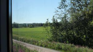 Landskapsutsikt en sommardag genom ett tågfönster.
