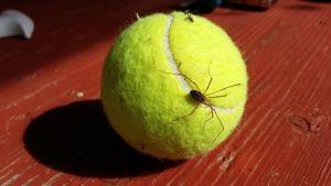 En gul tennisboll där en harkrank håller i sig.