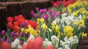 Planterade blommor i olika färger.