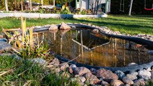 Damm  i Anette Blomqvists trädgård i Lovisa