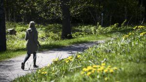 Kvinna går med stavar på en sandväg omringad av gräs och maskrosor.