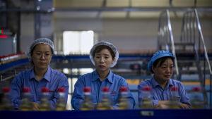Kinesiska fabriksarbetare stod vid det löpande bandet i en vinägerfabrik i Zhenjiang den 12 oktober.