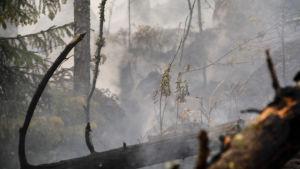 Rök och ånga vid eftersläckning av skogsbrand